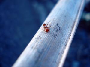 an-ant-1359654